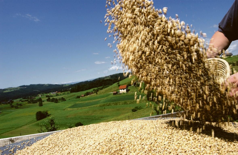 In der Südsteiermark hat sich die Destillerie Weutz die Gerste zu ihrem wichtigsten Rohstoff gemacht und ihren Schwerpunkt auf die Produktion von Single-Malt-Whiskys nach dem Pot-Still-Verfahren gesetzt.